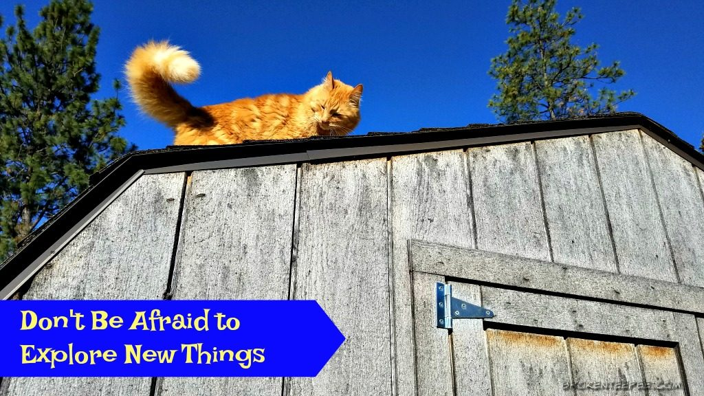 Life Lessons Learned from Cats, Hill's Science Diet® Cat Food, cat food, cat kibble, #HillsTransformingLIves, #AD