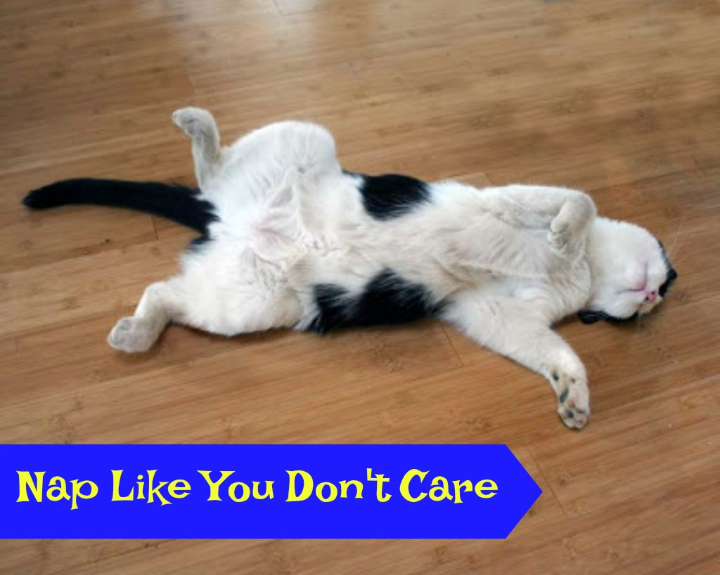 Life Lessons Learned from Cats – Part I