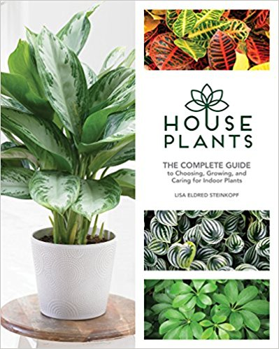 Choosing the Right Indoor Greenery for Your Home