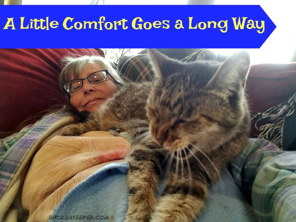 life lessons learned from cats, the Farm cats