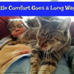 Life Lessons Learned from Cats – Part Two