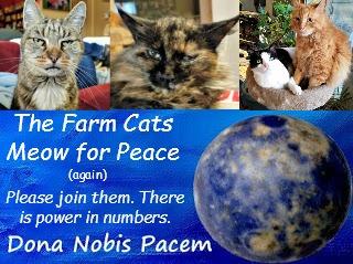 Blog Blast for Peace, the Farm cats, #BlogBlastforPeace #BlogBlastforPeace2017. #Blog4Peace