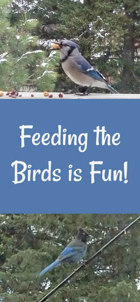 gift ideas for bird lovers, how to attract birds to your yard, feeding the birds is fun, blue jay, steller's jay