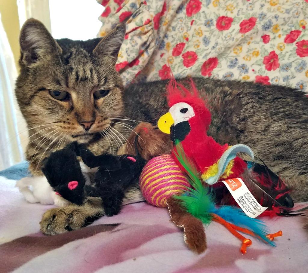Fun Cat Toys : Hartz cat toys for everyday fun