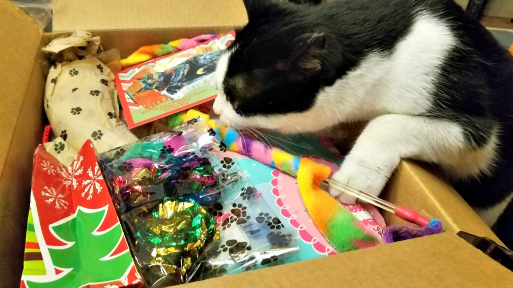 A Fun Holiday Tradition – Secret Paws Fun for the Farm Cats