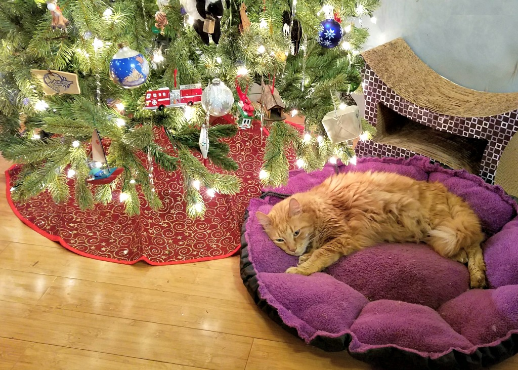 Artificial or Real Christmas Tree – What's for You?