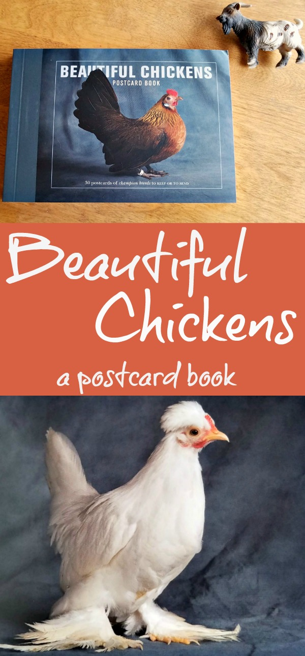 Beautiful Chickens Postcard book, postcard book, chickens, Quarto Gifts, AD