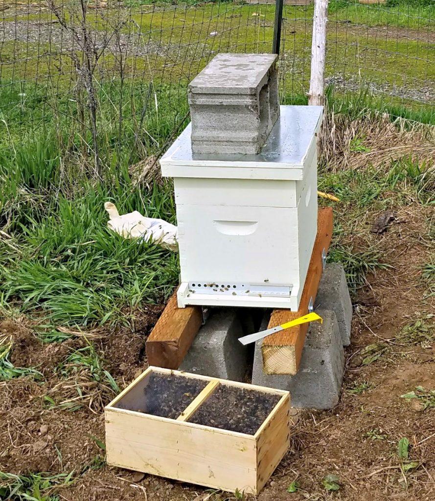 The Backyard Beekeeper, Kim Flottum, keeping bees, AD