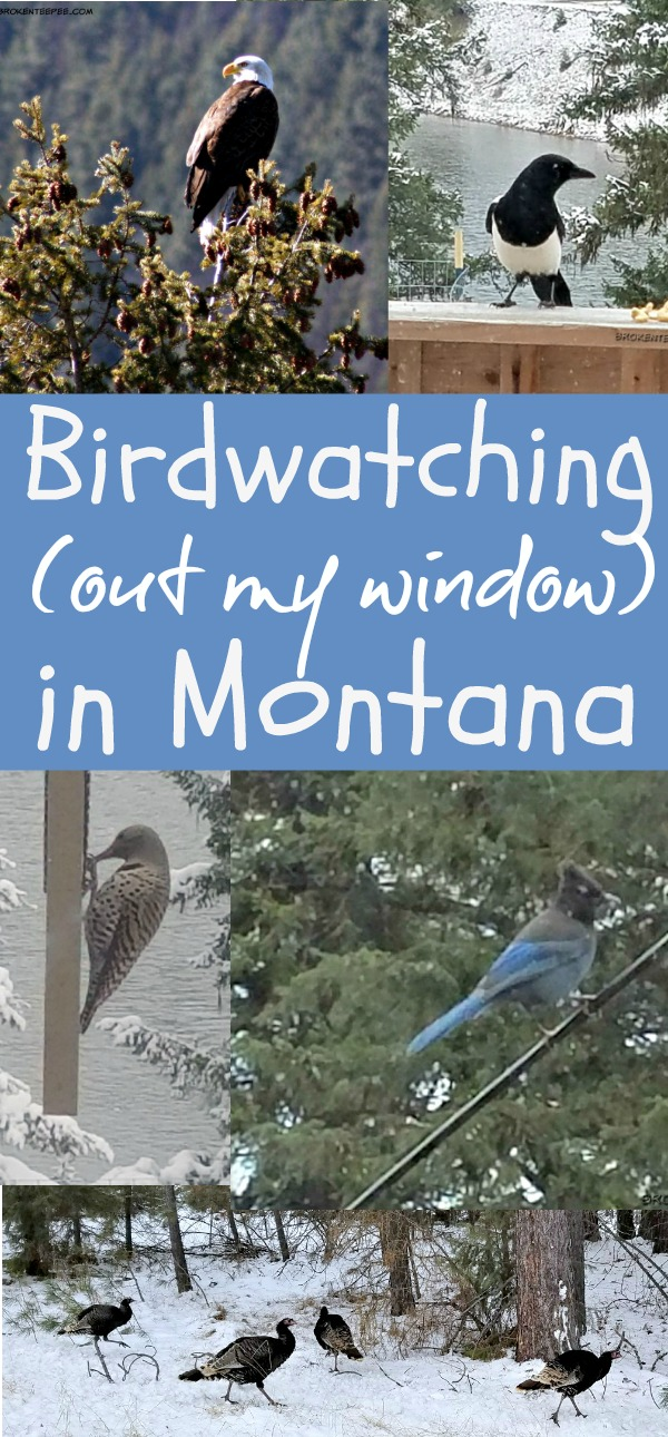Birdwatching in Montana, Backyard Birds, Birding Logbook, AD