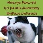 I'm Going to the 10th Anniversary BlogPaws Conference. How About You?