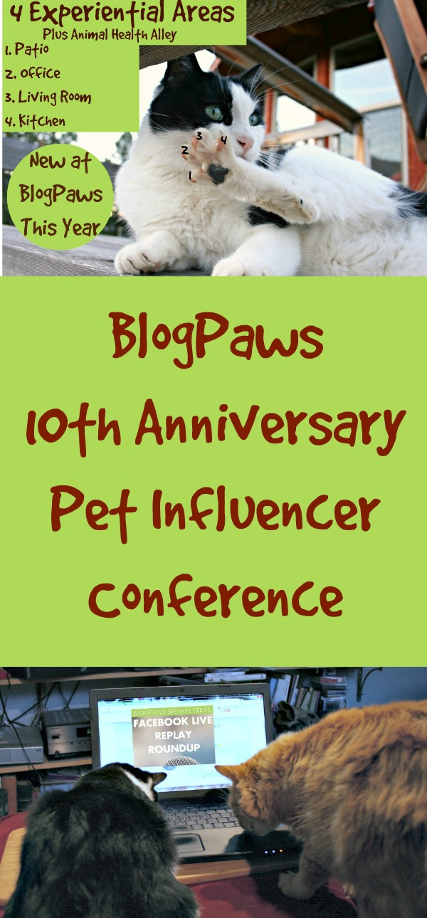 10th Anniversary BlogPaws Conference, Pet Influencer Conference, Blogging Conference, BlogPaws, Chewy.com, #OfficeSpace, #BlogPaws, #ChewyPartner, #AD