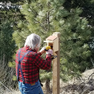 How to attract bluebirds to your yard, bluebird next box