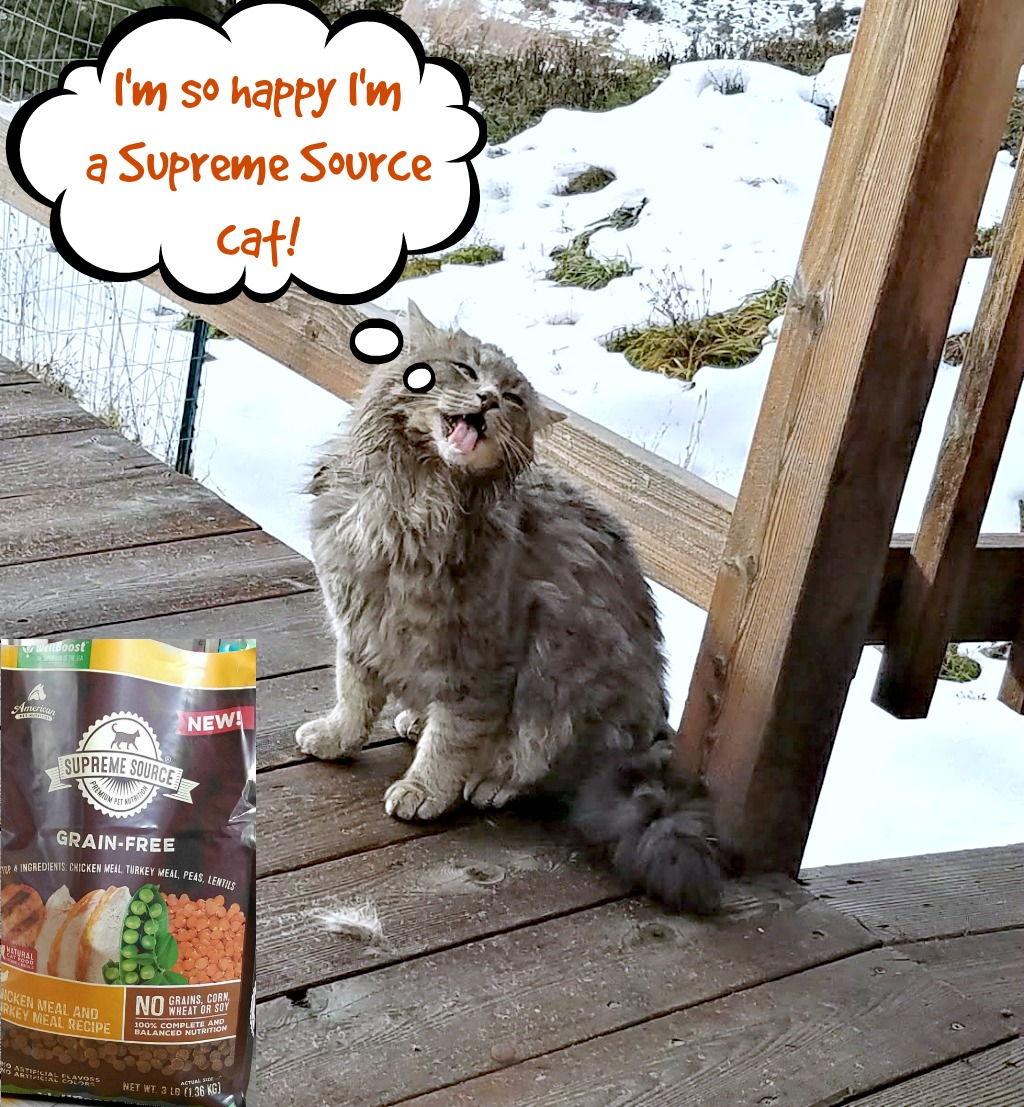 Supreme Source Grain Free Cat Food, quality cat food,Kitty the Feral Farm Cat, #SuperFoodSwitch, #IC, AD