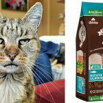 High Quality, Grain-Free Cat Food for Healthy, Happy Farm Cats