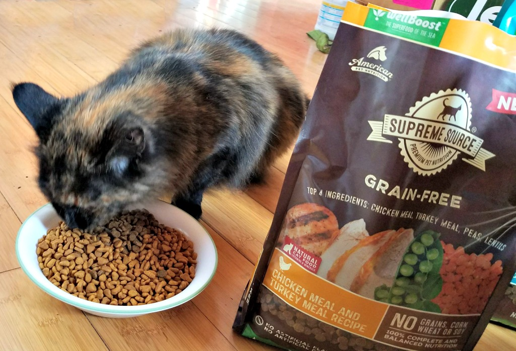 Supreme Source Grain Free Cat Food, quality cat food, Pumpkin the Farm cat, #SuperFoodSwitch, #IC, AD