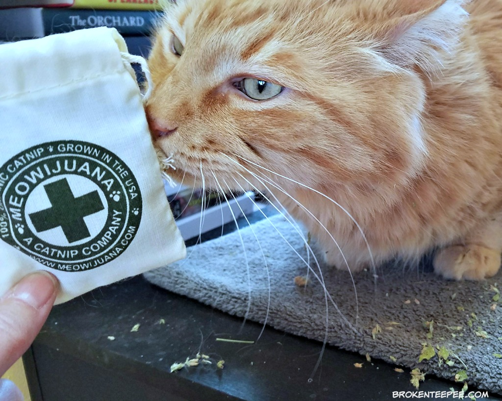 Pet Influencer Conference, BlogPaws, 10th Anniversary, Chewy.com, Sherpa the Farm Cat, #BlogPaws, AD