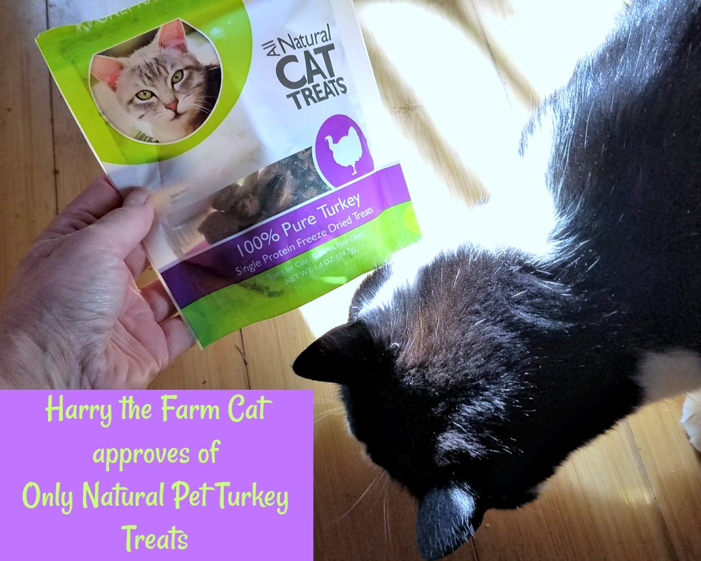 BlogPaws Swag Equals Farm Cat Fun – with a Giveaway!
