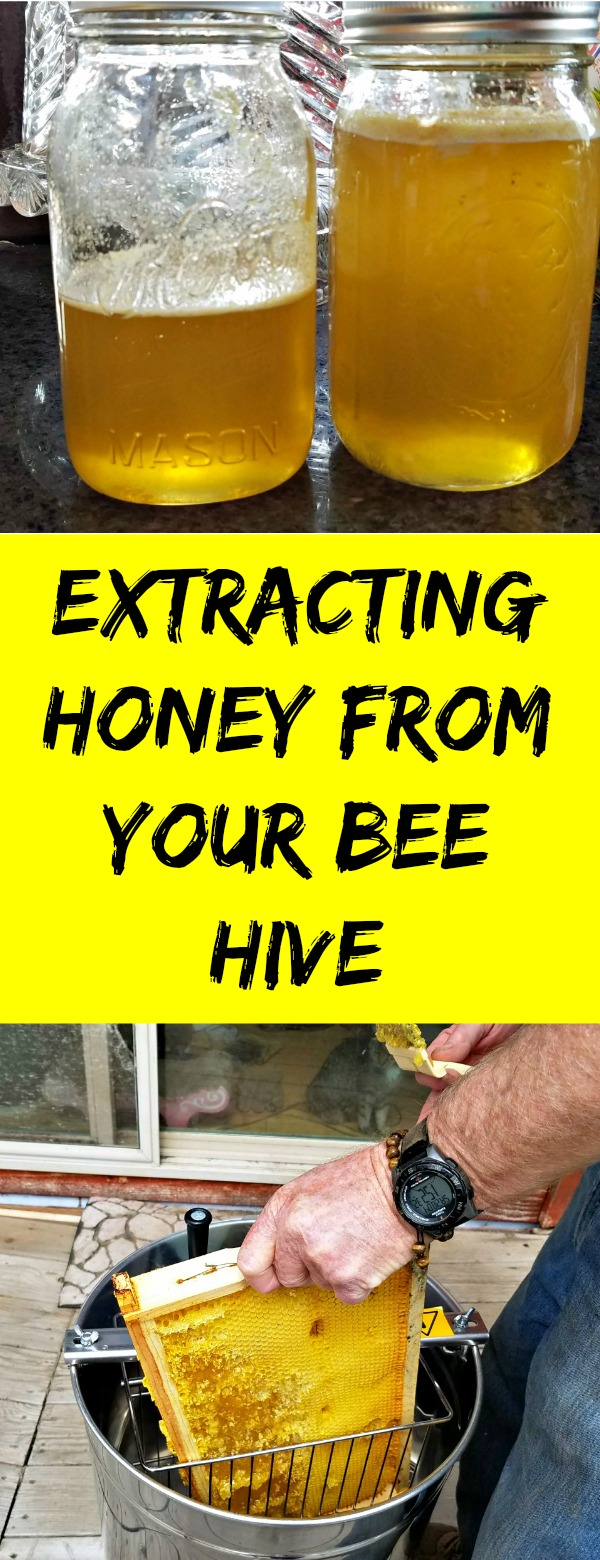 how to extract honey, honey, beehive, honey extractor