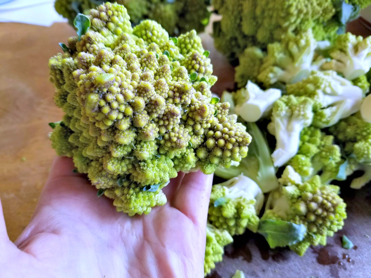 what is romanesco, how to freeze romanesco, romanesco,