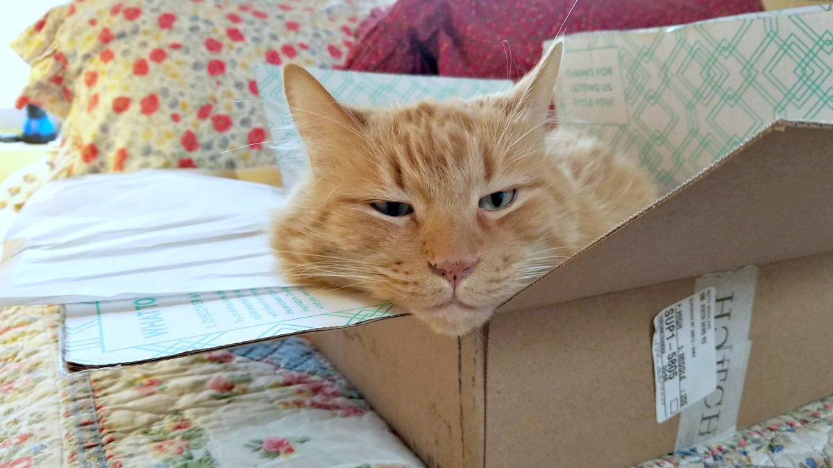 Stitch Fix, fashion subscription box, style in a box, fashion, subscription box, cat in a box, Sherpa the Farm cat