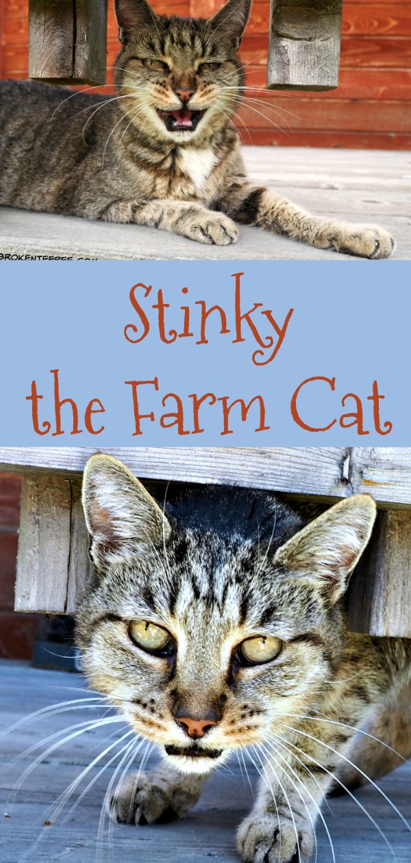 Stinky the Farm cat has left for the Rainbow Bridge. She will be missed on the Farm. Read her story if you don't know it and revisit it if you do