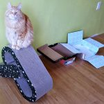 Gift Ideas for Your Cats from Petmate®