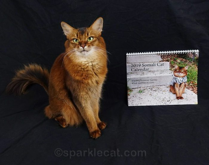 Cat Calendars with Famous Internet Cats – a Great Gift Idea for Cat Lovers with a Giveaway