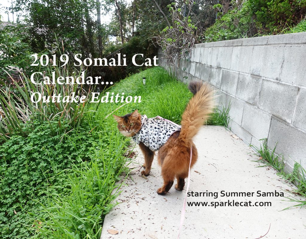 cat calendars, cat calendar, cat calendar 2019, famous internet cats, Katie, Waffles, Summer