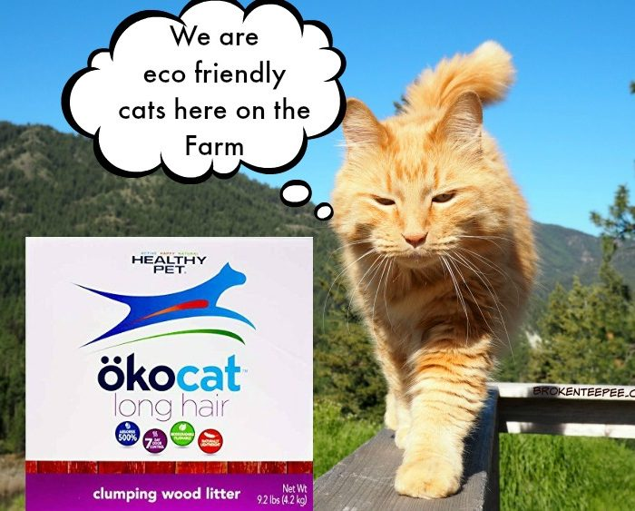 5 Reasons to Choose Eco Friendly Cat Litter from ökocat