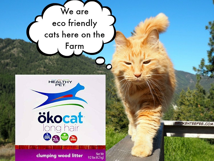 eco friendly cat litter, ocokat, Sherpa, AD