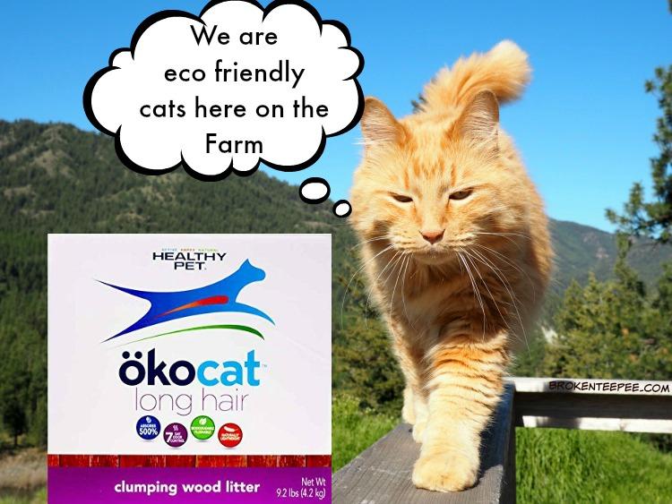 eco friendly cat litter, ocokat, Sherpa, AD