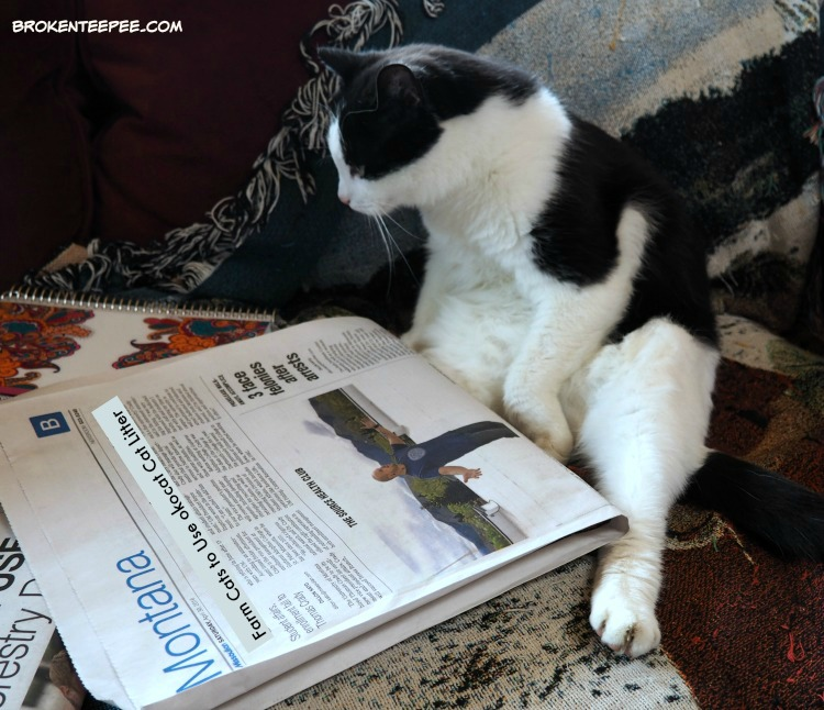 eco friendly cat litter, ocokat, Harry reading the paper, AD