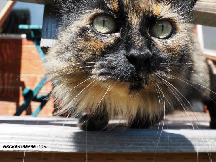 eco friendly cat litter, ocokat, Pumpkin, AD