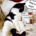 The Secret Language of Cats by Susanne Schötz – Blog Tour and Book Review with a Giveaway