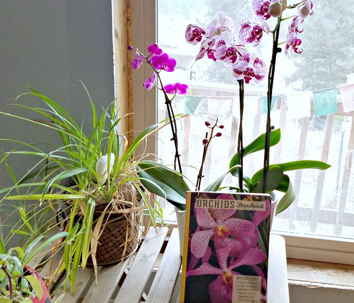 Orchids Handbook by Michael Tibbs – Book Review