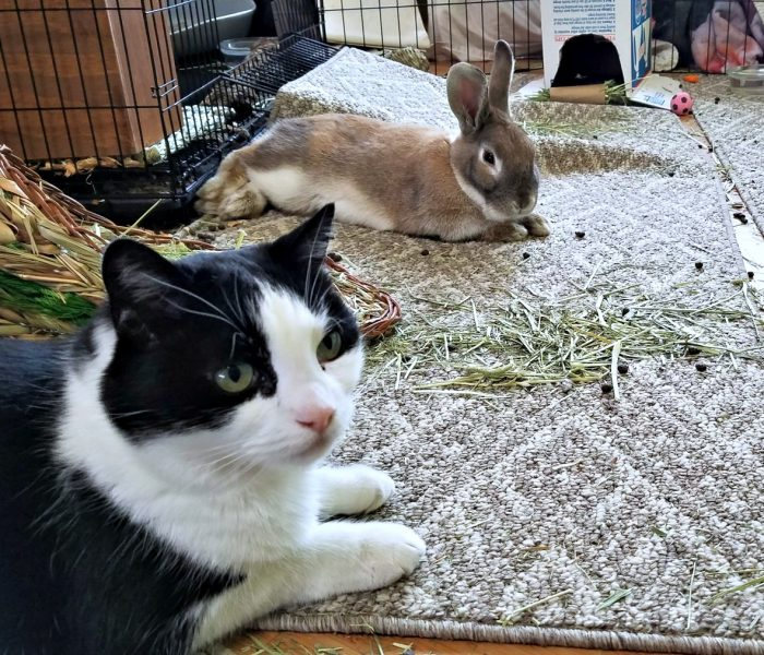 Rabbits and Cats: Introducing A Rescue Rabbit to Your Cat(s) or When Harry