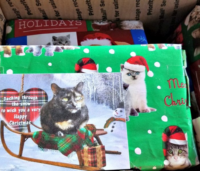 Christmas Gifts for Cats – Secret Paws Fun for the Farm Cats