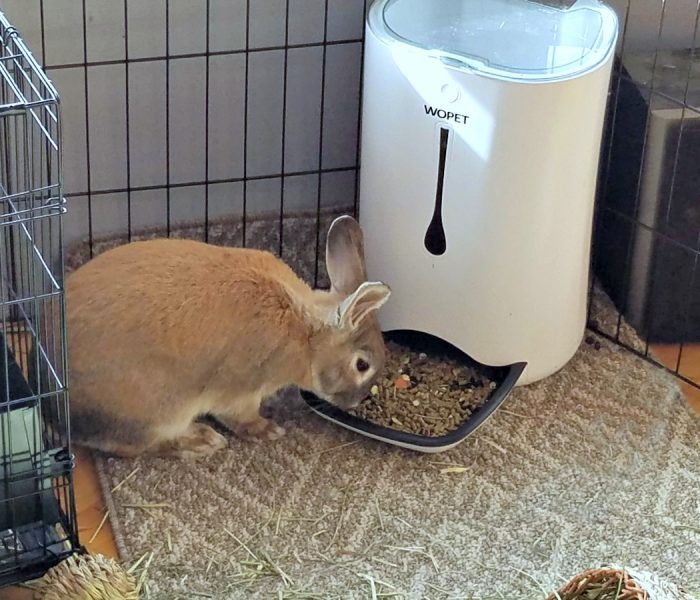 Can You Use an Automatic Pet Feeder for a Rabbit?