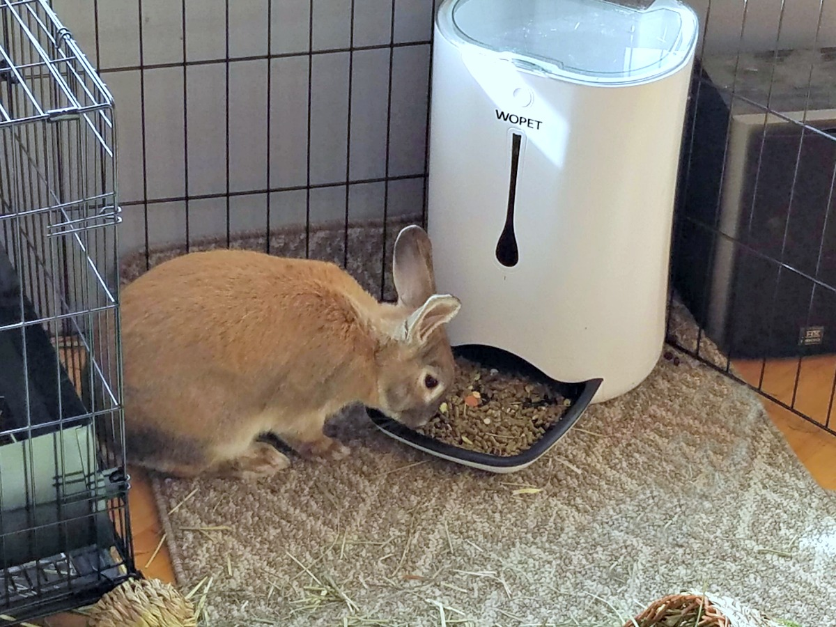cappuccino the bunny, automatic pet feeder, WOpet, bunny feeder, AD