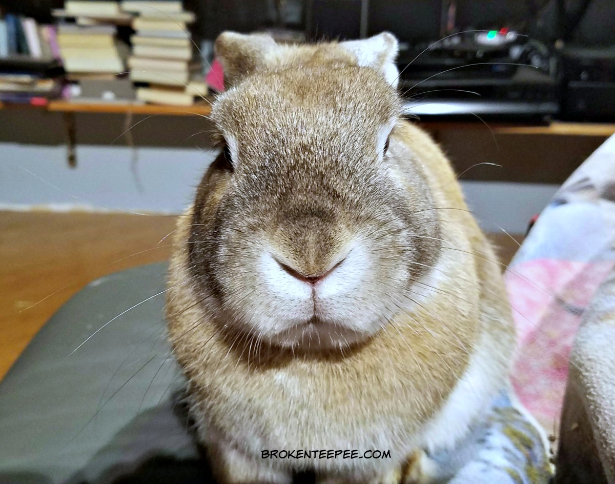 disapproving bunny, cappuccino the bunny