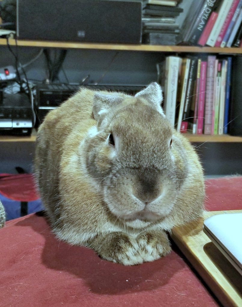 Cappuccino the bunny, disapproving bunny disapproves