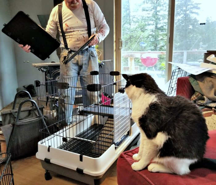 Using a Cage for Short Term Stays for Your Rescue Rabbit
