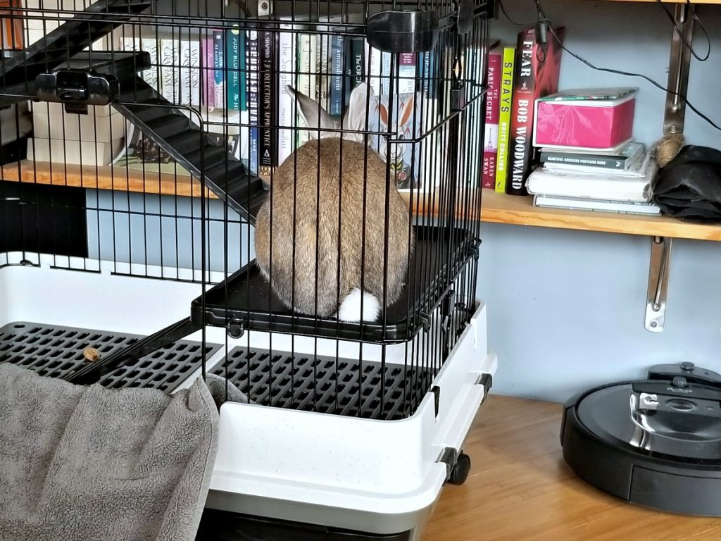 Cappuccino the bunny in his cage