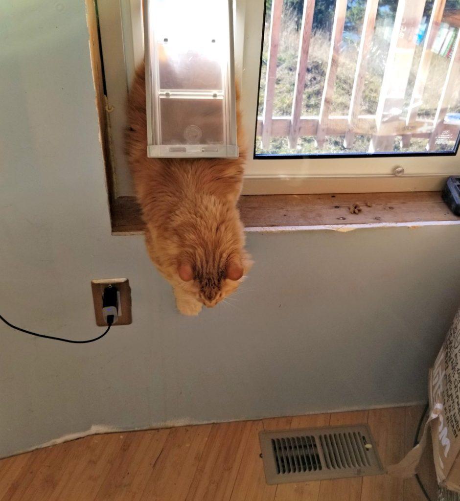 Sherpa uses the cat door