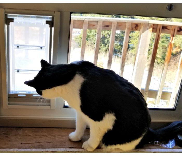 5 Reasons to Install a Cat Door. Installing a Sash Window Cat Door
