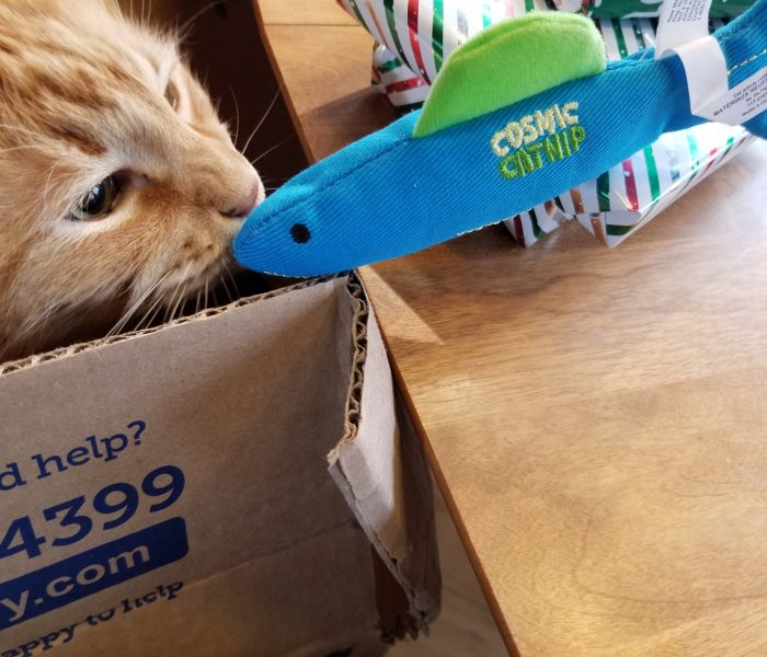 Holiday Fun – Secret Paws, Secret Santa, Cappuccino Gets His Romaine
