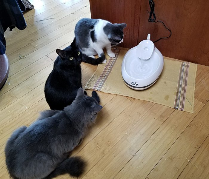 Cat Water Fountain – Hydration is Very Important for Your Cat