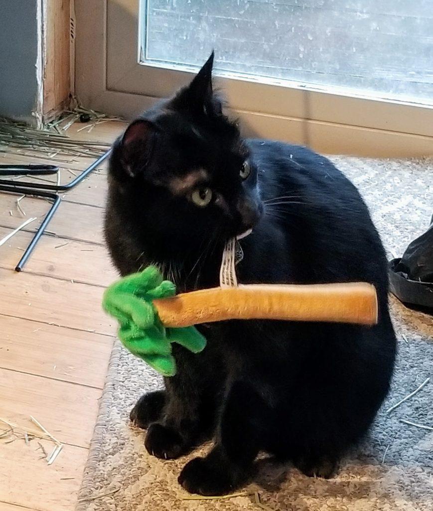 Queenie the Farm cat