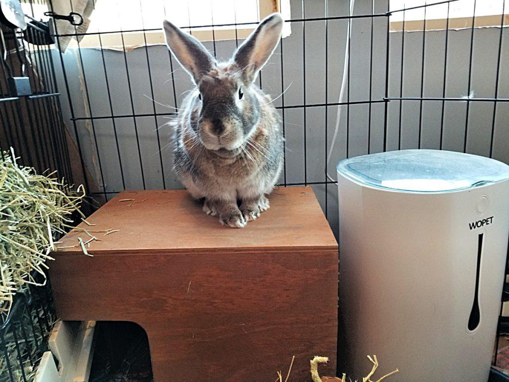 bunny in his pen